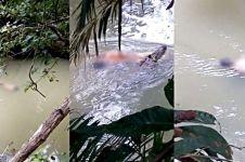 Mandi di sungai, pria asal Berau ini tewas dimangsa buaya