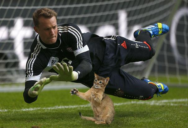 10 Foto editan seandainya bola untuk sepakbola diganti jadi kucing