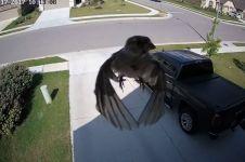 Bukannya terbang, burung ini justru terlihat melayang