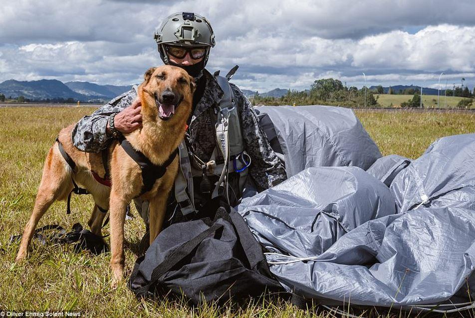 anjing militer terjun solentnews