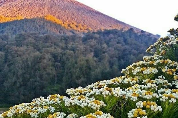 Kasus edelweis dan larangan-larangan penting saat mendaki gunung