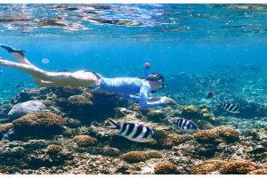 10 Lokasi snorkeling paling cantik di dunia, Indonesia juga punya