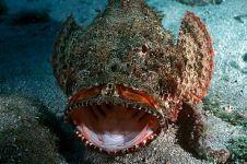 Ini 10 ikan paling mematikan di dunia, ada yang tubuhnya berlistrik