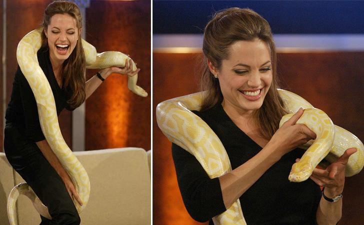 ular dan selebriti © bradofo.com