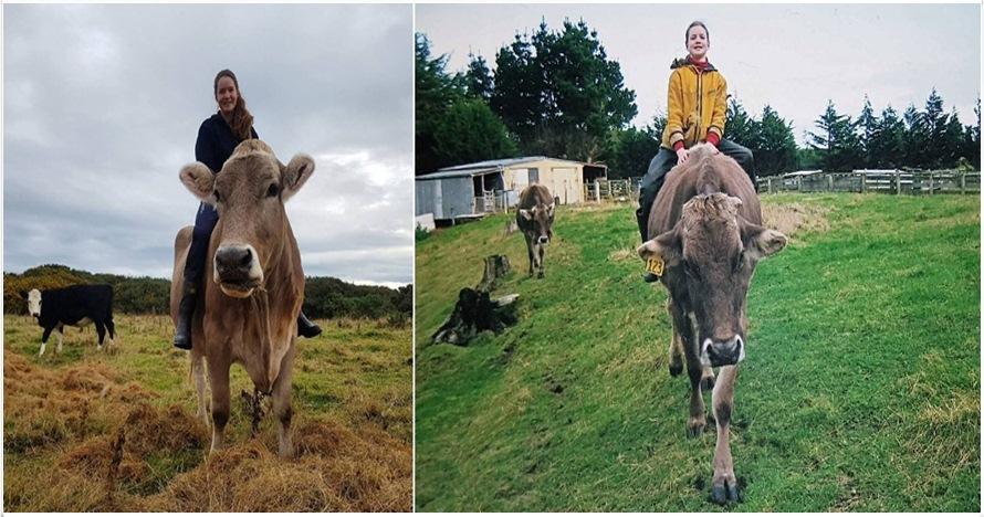 Gadis ini latih sapinya menjadi kuda, alasannya mengejutkan