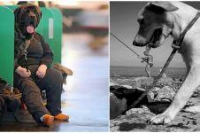 15 Foto hewan dipotret pas waktunya, momen perfect nih