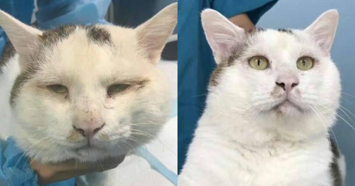 Operasi kelopak mata, kucing ini sekarang jadi idola netizen