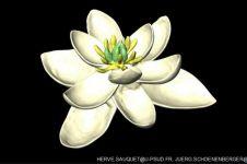 Ilmuwan temukan bentuk bunga purba tertua, usianya 140 juta tahun