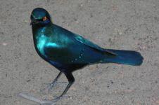 10 Hewan ini punya 'kecantikan' yang bikin berdecak kagum
