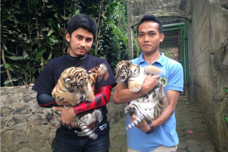 Jadi bapak asuh harimau, ini 5 bukti sepupu Raffi Ahmad pencinta hewan