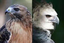 10 Burung paling mematikan di dunia, ada yang bisa membunuh manusia