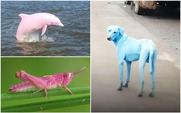 5 Hewan ini alami perubahan warna tubuh, ada belalang berwarna pink