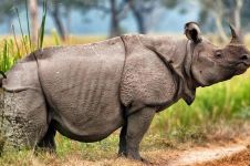 5 Hewan ini populasinya paling menurun tajam sejak zaman dinosaurus