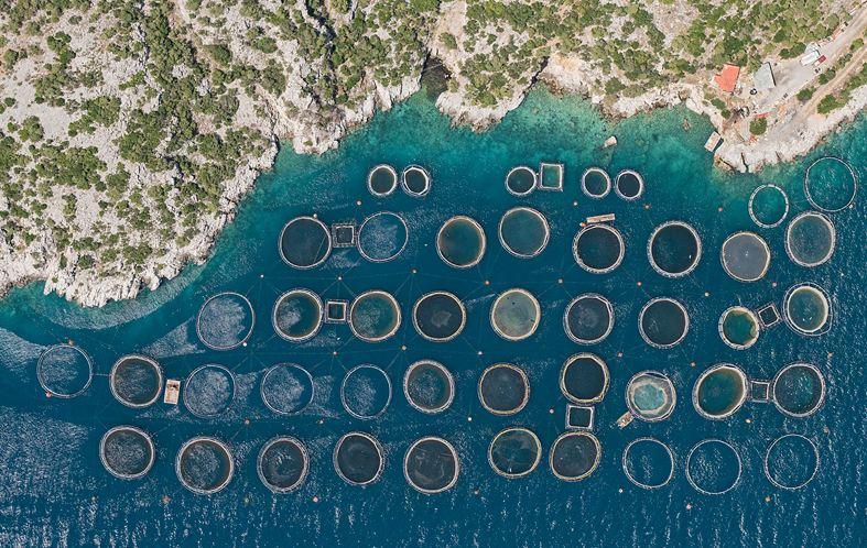 7 Foto tambak ikan diambil dari langit ini artistik banget