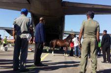 Presiden Jokowi laporkan kuda pemberian masyarakat ke KPK