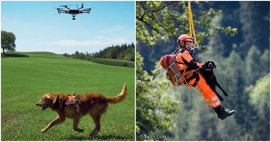 5 Aksi anjing dalam proses penyelamatan manusia ini bikin salut