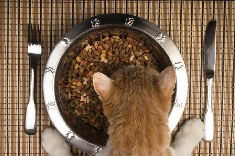 Dari makanan kucing sampai kasur, ini 11 obsesi makan teraneh di dunia