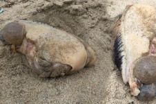 10 Hewan aneh yang terdampar di tepi pantai, bentuknya bikin merinding