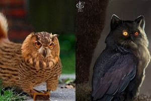 15 Editan kucing dan burung ini keren abis, coba ada di dunia nyata