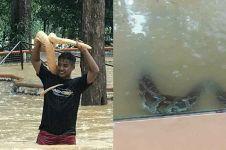 10 Potret ngeri saat taman ular diterjang banjir, bikin merinding
