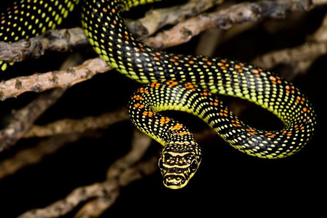 ulars © 2017 brilio.net berbagai sumber
