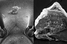 10 Karya seni ultra kecil ini bikin melotot, ada seukuran butiran debu