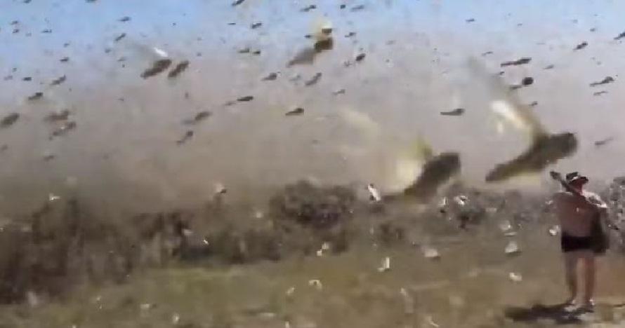 Serbuan belalang kumbara ini persis film horor, merinding melihatnya