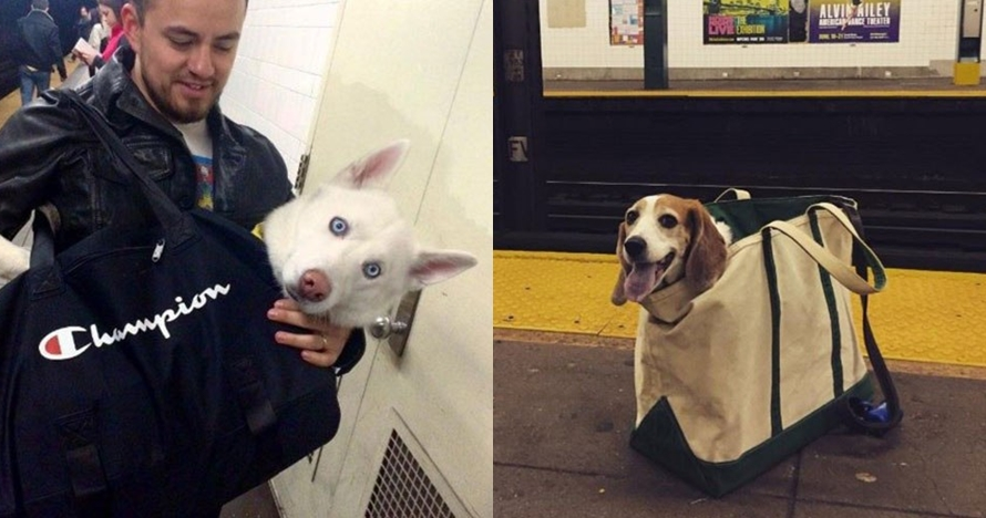10 Potret anjing di dalam tas, ekspresinya menggemaskan