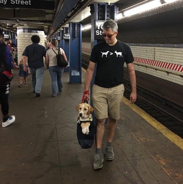 anjing dalam tas © twistedsifter.com