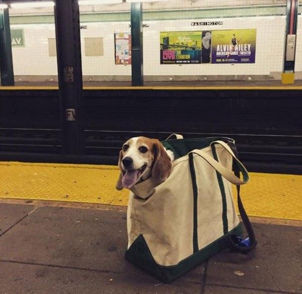 anjing dalam tas Headline © twistedsifter.com