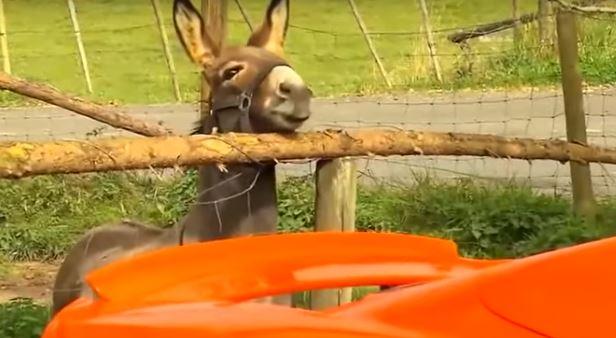 anjing keledai wortel © 2017 brilio.net