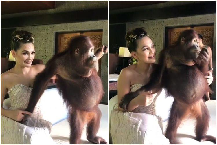 foto bareng orangutan luna maya dikecam © 2017 instagram