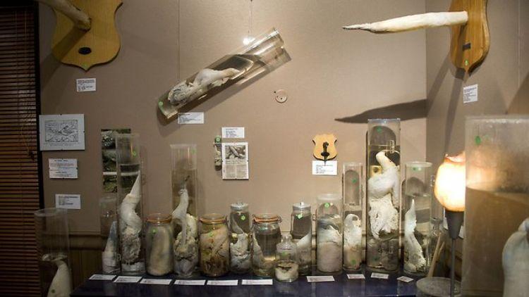 5 Museum dunia ini punya koleksi barang paling aneh dan absurd abis