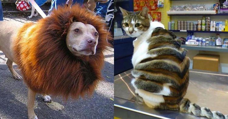 12 Hasil cukur bulu hewan ini nyeleneh abis, ada yang mirip singa