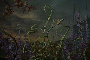 10 Karya fotografi bunga liar, hasilnya dramatis