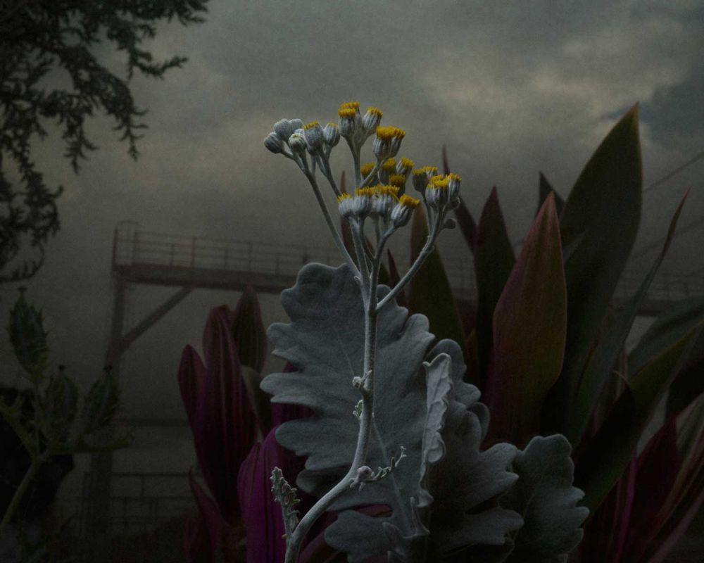 foto bunga dramatis © www.danielshipp.com