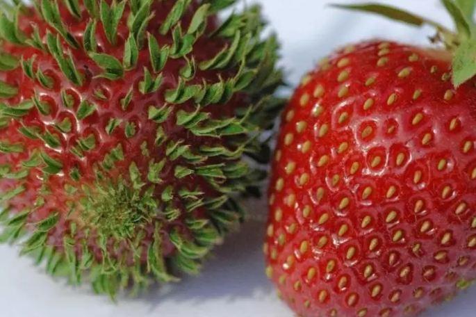 buah aneh  © www.buzzfeed.com