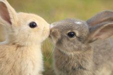 15 Adegan hewan berciuman, bukti mereka juga romantis