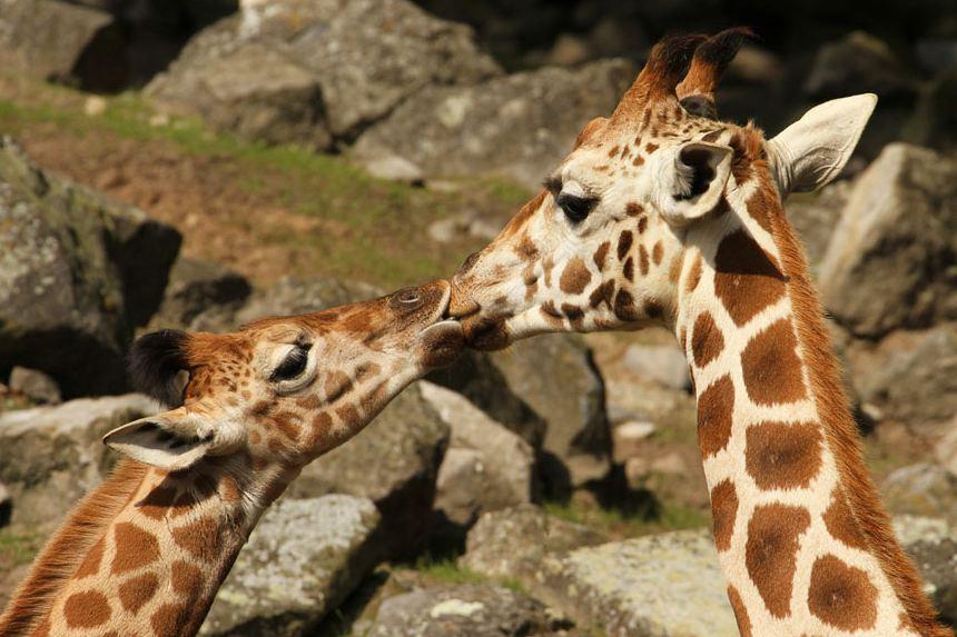 hewan berciuman © 2017 brilio.net berbagai sumber