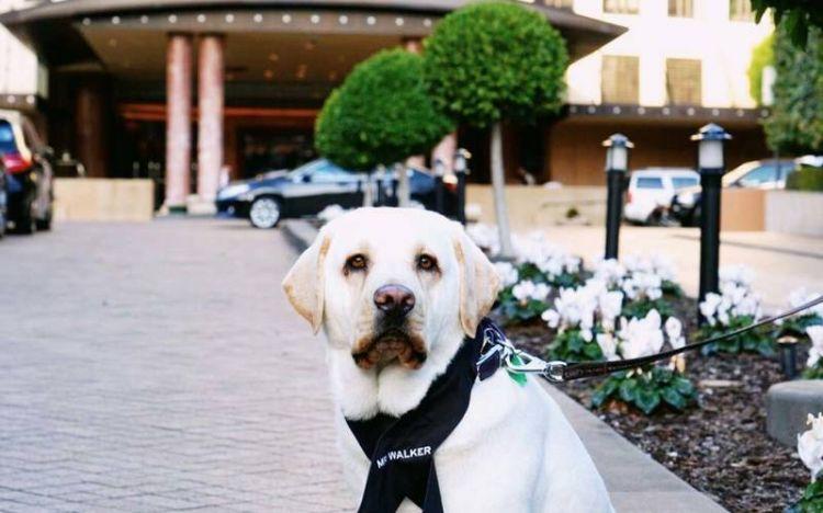 Unik, hotel ini pekerjakan anjing untuk melayani tamu