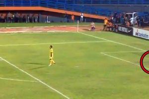 Kucing ini masuk & tiduran di lapangan saat laga Persela vs Borneo FC