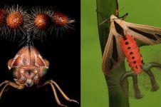 7 Serangga ini punya bentuk sangat aneh, ada yang mirip alien