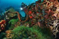 Selain rayakan Sumpah Pemuda, ini misi mulia Mapala UI di Teluk Tomini