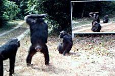 Reaksi tak terduga hewan-hewan liar saat di depan cermin, epic abis!
