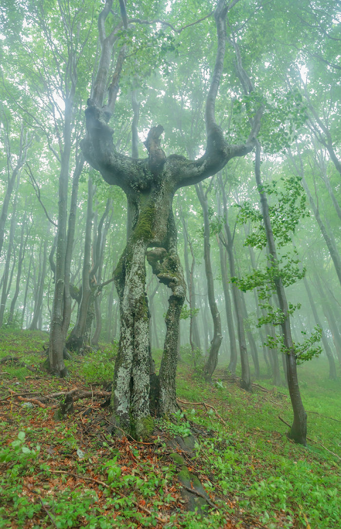 pohon pareidolia © 2017 elitereaders.com