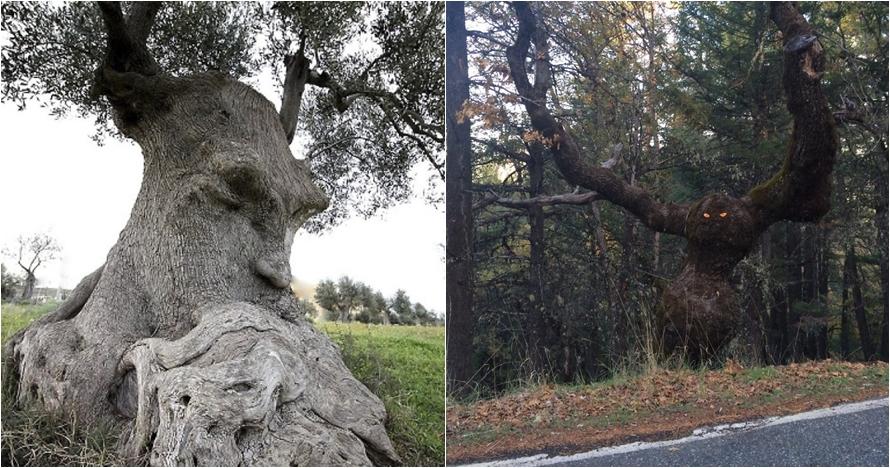 Kalau kamu lihat wajah di 20 pohon ini, berarti alami pareidolia