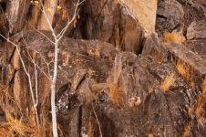Bisakah kamu menemukan hewan di 13 gambar ini kurang dari 1 menit?