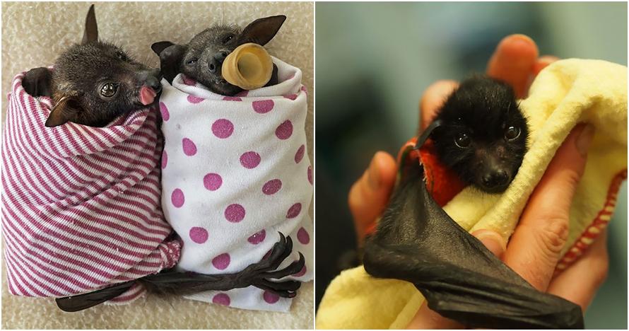 Bukan seram, 10 foto kelelawar ini malah terlihat innocent bak bayi