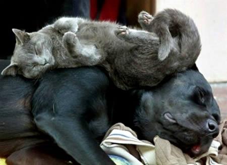 hewan tidur © oddee.com