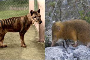 8 Hewan ini sudah lama punah tapi diyakini masih hidup, apa saja?